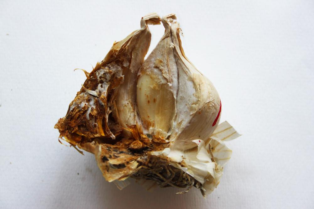 fusariosi aglio
